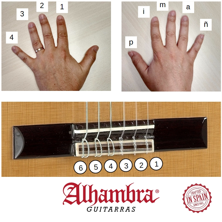 Learn to play the guitar, fingering